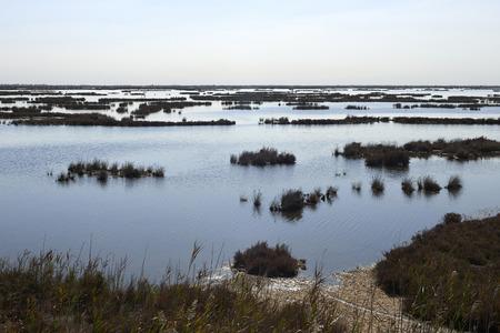 Caposile (Ve),Italy, a view of the venetian lagoon Foto de archivo - 112600289