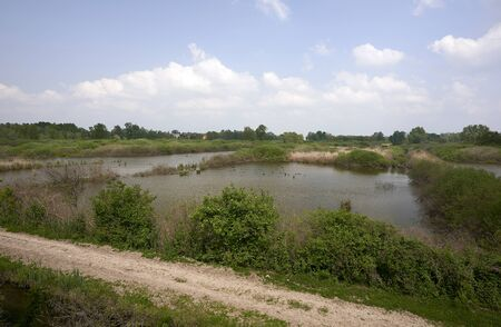 Marcaria (Mn), Italy, the peat bog of Marcaria