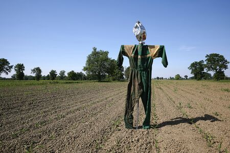 San Daniele Po (Cr), Italy, a scarecrow in a corn field in the flood plain of the river Po