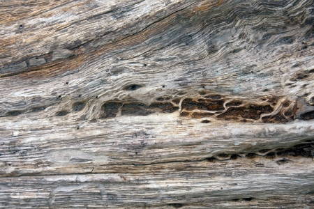 Natural Old Wood Texture Stock Photo