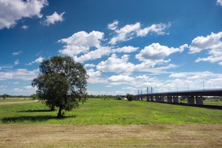 Tree and bridge over river Sava, Zagreb, Croatia photo