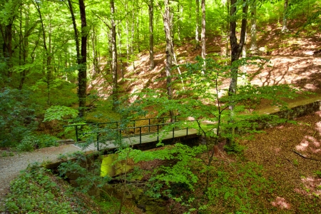Forest with footpath and small bridge in springtime photo