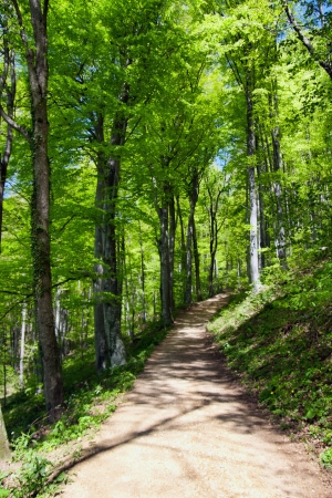 Forest with footpath in springtime photo