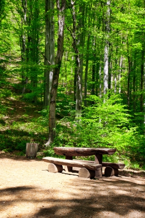 place to rest in the forest photo