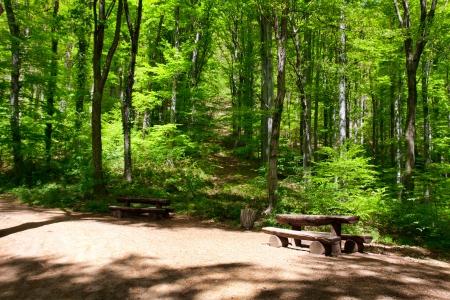 centenarian: paisaje de lugar para descansar en el bosque