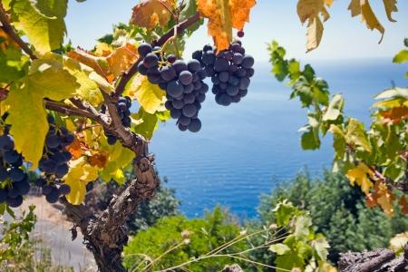 grape and sea Stock Photo