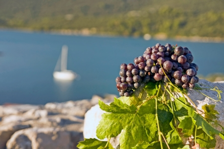 grapes on stone
