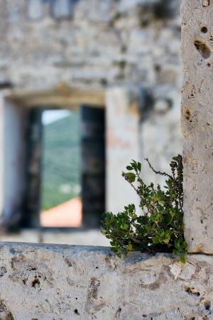 Green plant on stone window frame Stock Photo