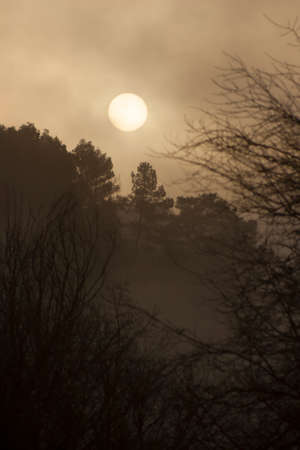 Landscape of a forest with the sun covered by fog