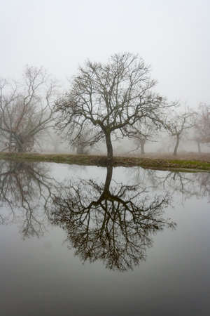 Landscape of a tree in the mist reflected in the water of a river Standard-Bild