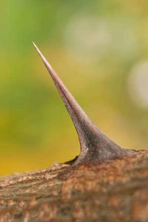 The sharp, pointed thorn of a bush or rose bush. Banco de Imagens