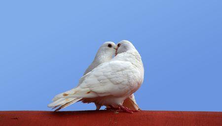 love birds Stock Photo - 2949632