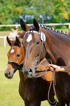 horses Stock Photo - 10409836