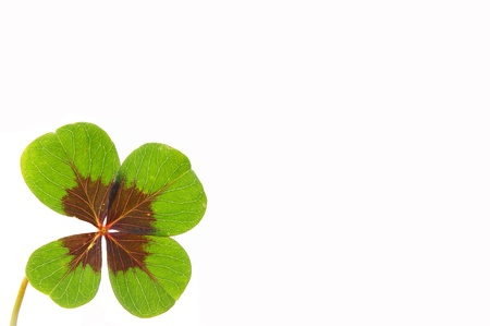 petalled four-leafed clover Stock Photo - 10462491