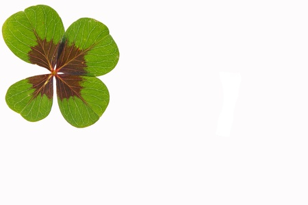 petalled four-leafed clover Stock Photo - 10462490