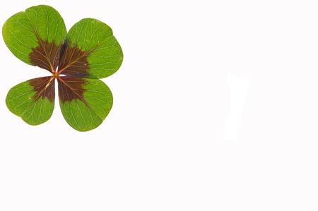 fourleafed: petalled four-leafed clover