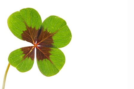 petalled four-leafed clover Stock Photo - 10462494