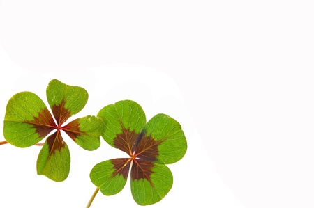 petalled four-leafed clover Stock Photo - 10462492