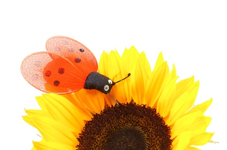 sunflower with butterfly photo