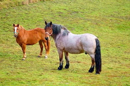 coupling: horses in a paddock