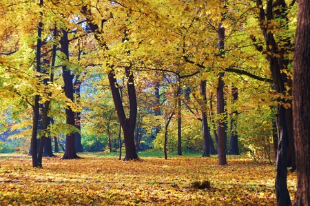 herbst: golden autumn