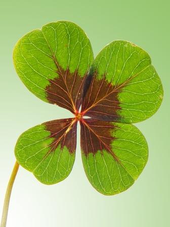 lucky charm: lucky clover