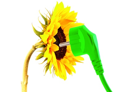 sunflower with a power plug Stock Photo - 11980763