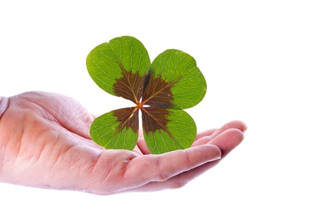 Hand with a lucky clover Stock Photo - 11980774