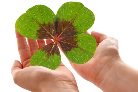 woman handle success: two Hands with a Lucky Clover