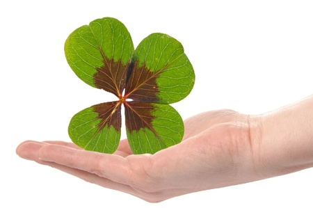 woman handle success: Hand with a Lucky Clover Stock Photo