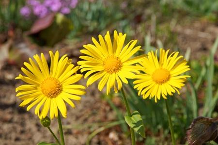 cruz de primavera la hierba Foto de archivo - 13310712