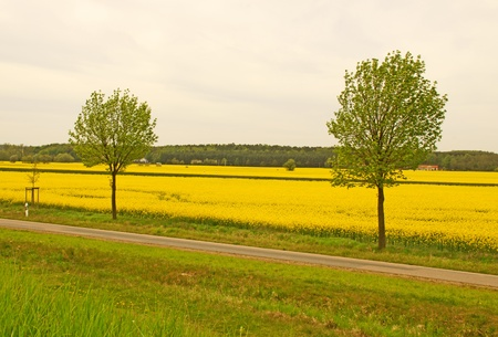 biotope: Landscape with rape field Stock Photo