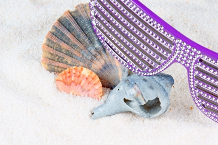 Shells in the sand photo