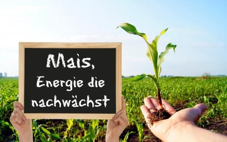 Corn, the energy grows Stock Photo - 14458757