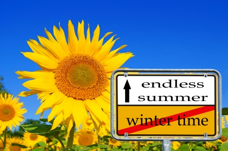 summer time: sunflower and summer time Stock Photo