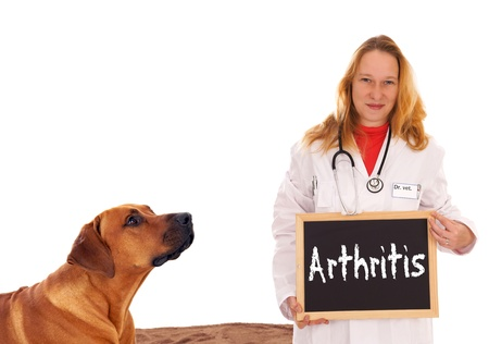 Veterinarian with dog and shield with the word arthritis Stock Photo - 16577850