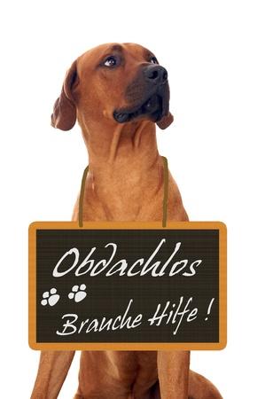 tierschutz: Hund und Schild mit dem Deutsch Worten Homeless - bitte um Hilfe