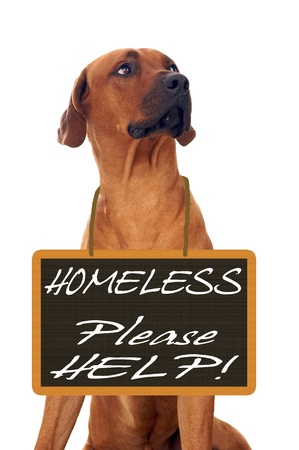 Dog and Sign with the words Homeless - Please Help photo