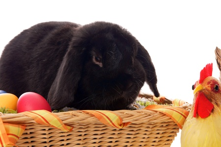 Easter Bunny in basket Stock Photo - 17569053