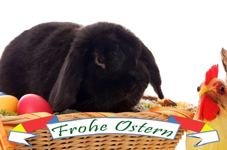 Easter Bunny in basket Stock Photo - 17569050