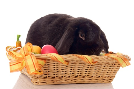 osterfest: Easter Bunny in basket