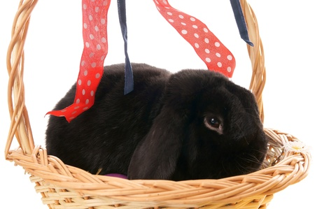 osterfest: Bunny in basket Stock Photo