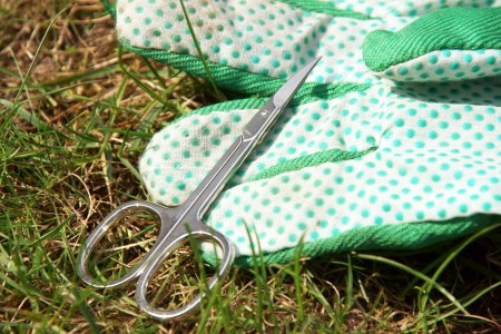 Lawn care with nail scissors Stock Photo - 19268321