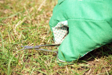 Lawn care with nail scissors Stock Photo - 19268320