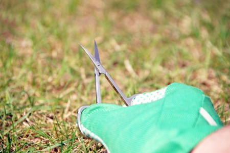 Lawn care with nail scissors Stock Photo - 19268317