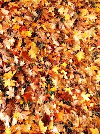 hojas de colores: Fondo colorido de las hojas Foto de archivo