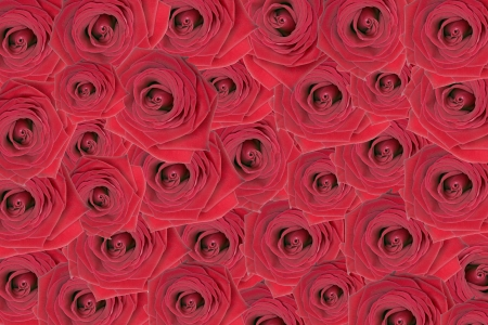 love proof: roses