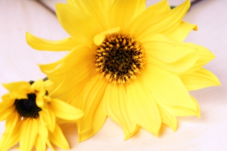 floristry: yellow flowers on a wooden board Stock Photo