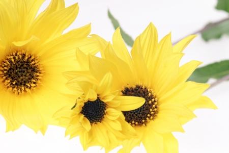 flowerpower: yellow flowers