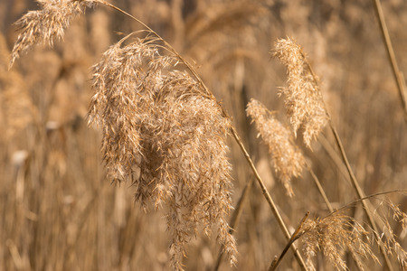 grasses: dried grasses